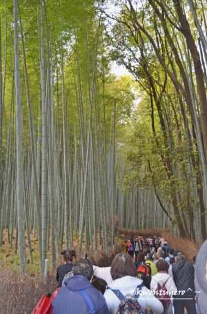 Tourist pathway to the Bamboo Grove
